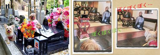 2012年09月09日お墓参り#20(リルの誕生日) openingsize