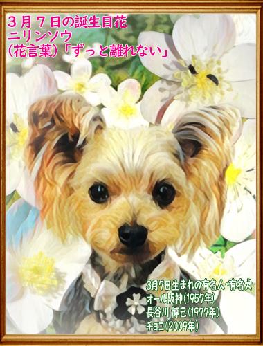 00誕生日 2020年03月07日チョコちゃん(blog)11歳