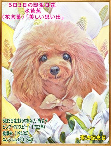00誕生日 2020年05月03日エンジェルちゃん(blog)8歳