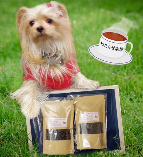 2020年05月14日メグちゃんからコーヒーをいただきました