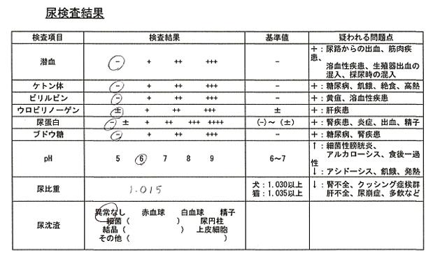 202000624 尿検査(PV尿検査)blos