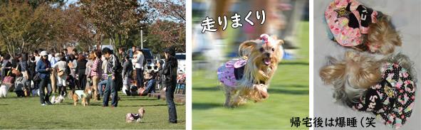 2012年11月03日卒オフ会openingsize