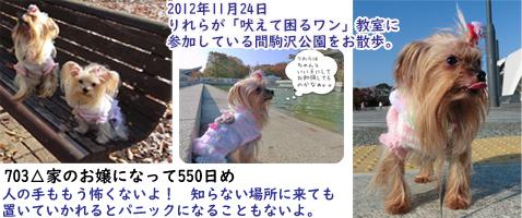 2012年11月24日駒沢で「吠えて困るわん」トレーニング教室openingsize