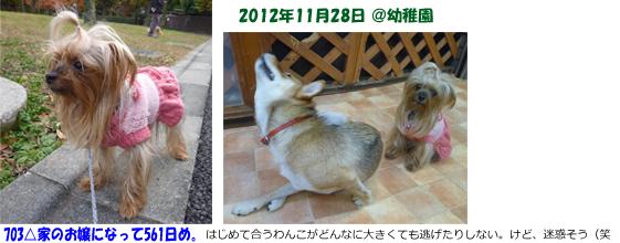 2012年12月05日幼稚園りれら72日め&パコ67日めopeningsize