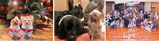 2012年12月15日~16日旅#6ワフでクリスマスパーティー15日③パーティー (3)openingsize