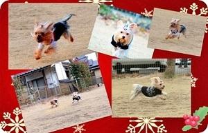 2012年12月23日お墓参り#23(リルの8周忌) (43)openingsize