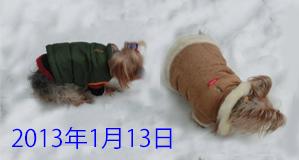 2013年01月13日雪 openingsaize