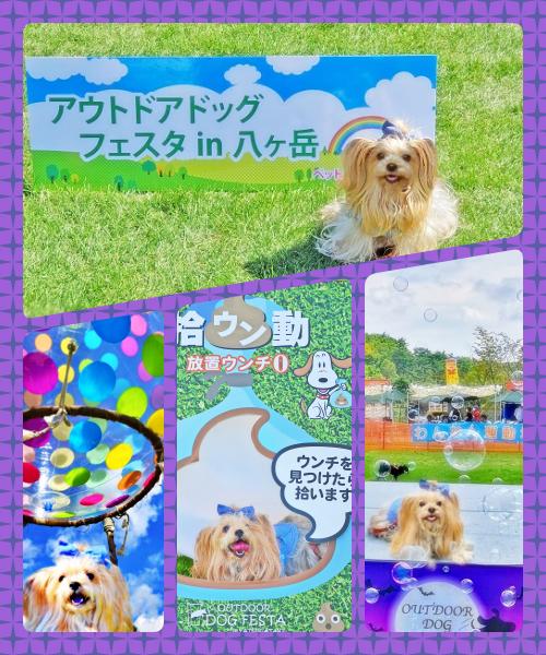 2020年09月21日八ケ岳☆ collage