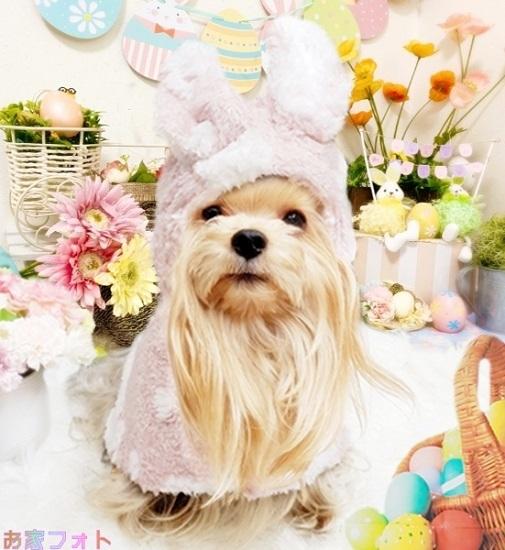 EasterBunny20210404( blos)