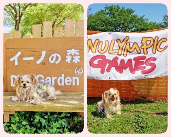(blos)2021年04月10日イヌリンピック桜花祭@イーノの森 (6)