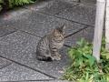 和猫はカワイイ