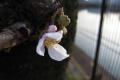 春はじめ2
