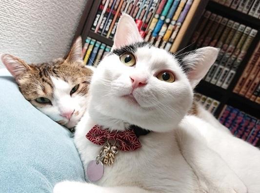 何故か空を見る白黒猫と、何故か不機嫌そうなキジ白猫