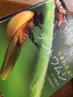 20200611 カタツムリ (3)