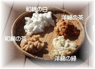 綿の収穫5-2