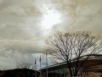 ツリーズカンパニー 鳥取市 布施