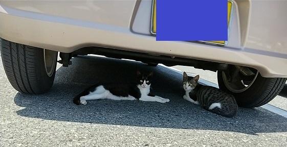 道の駅の猫