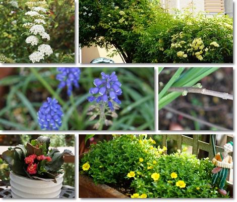 庭の花々(2021_04)