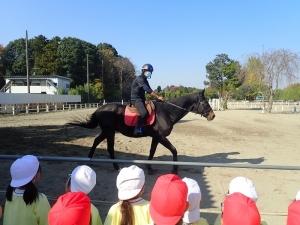 乗馬体験○ (60)