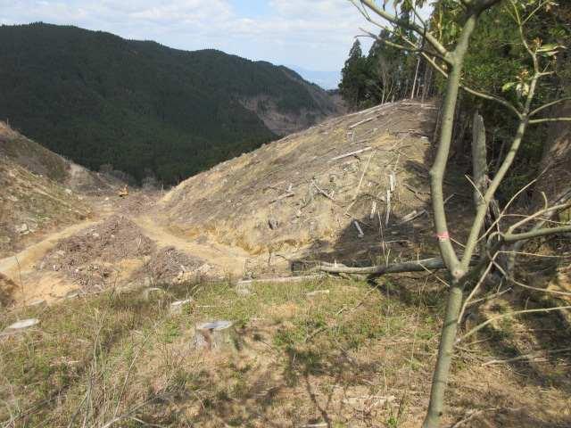 IMG0033JPG伐採が進んでいる