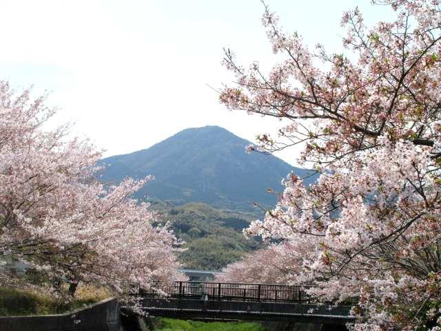 IMG0046JPG桜と貫山