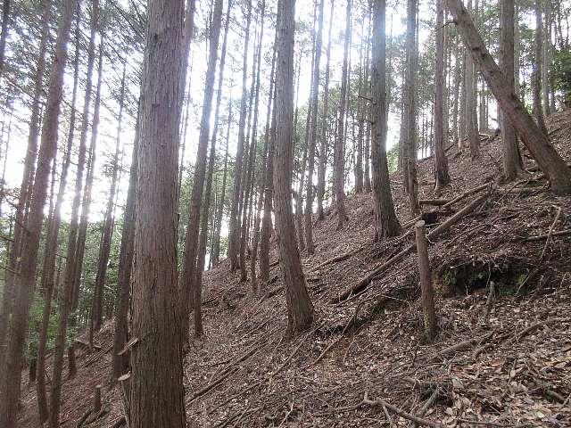 IMG0021JPG杉林の急登