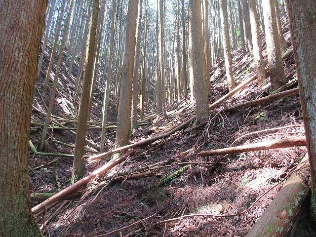IMG0070JPG倒木の多い谷を