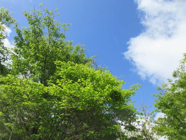 IMG0064JPG青空と新緑