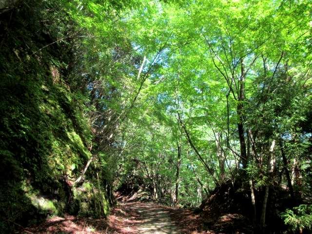 IMG0007JPG経読林道の緑