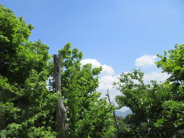 IMG0129JPG青空と緑