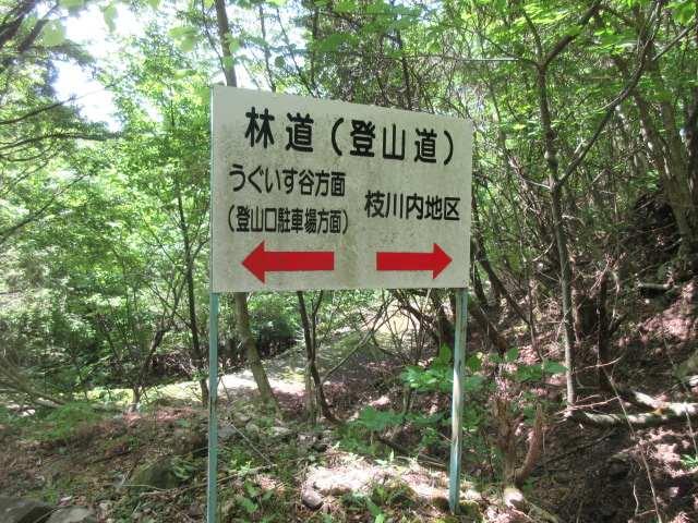 IMG0130JPG経読林道に下りてきた