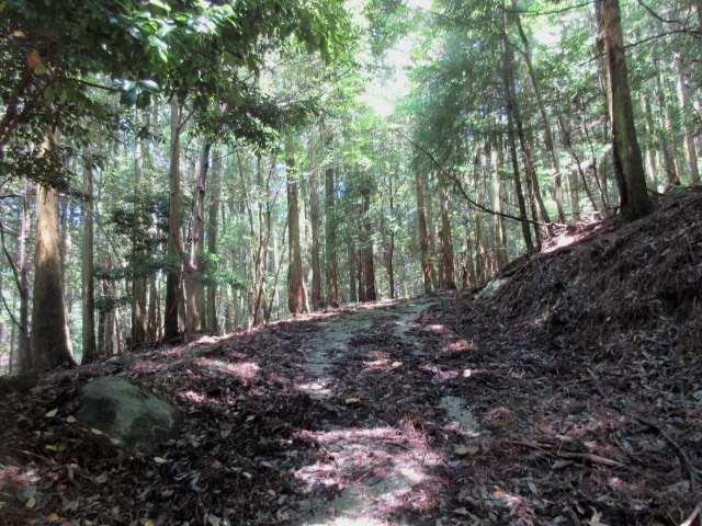 IMG0030JPG林道歩きが長い