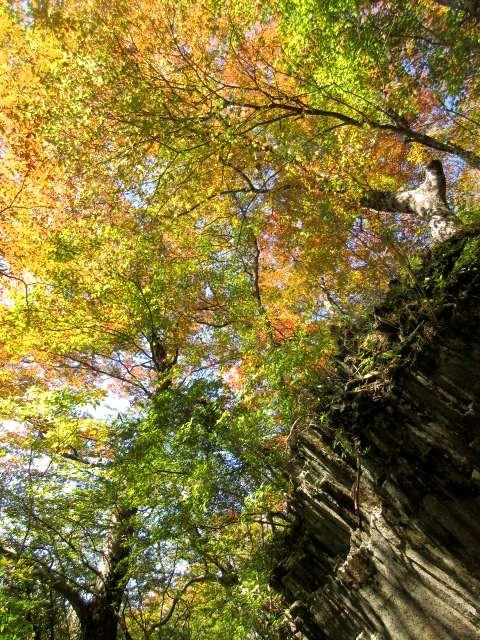 IMG0022JPG材木岩の紅葉