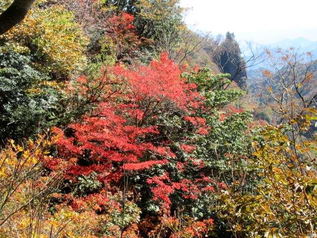 IMG0036JPG山腹の紅葉