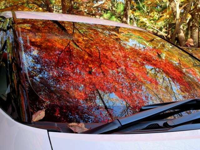 IMG0043JPGフロントガラスの紅葉4