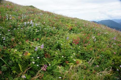 平標山写真36