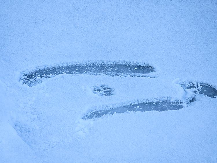 フィンランド 氷 冬 動物の足跡 ツルン