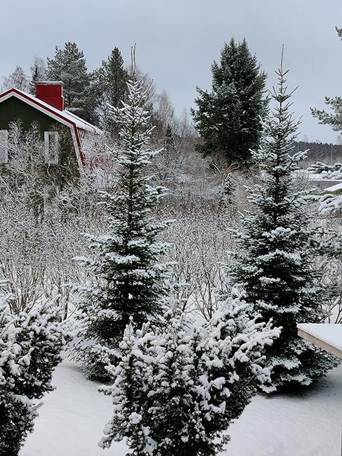 フィンランド 雪景色 4月 冬が戻ってきた Takatalvi