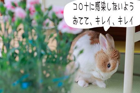 2_MG_5403.jpg