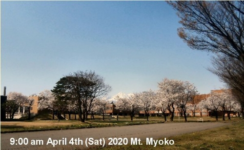 01a 600 20200404 01 Mt_Myoko Cherr_blossonms in Full