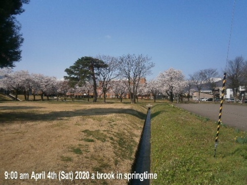01c 600 20200404 03 ♪春の「小川」さま