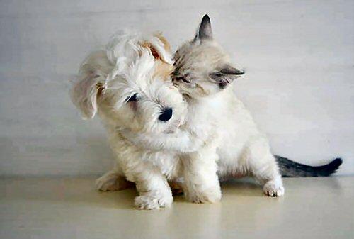 03c 500 This kitten likes puppies