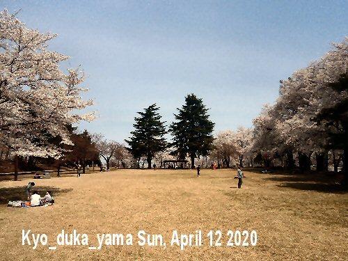 01a 500 経塚山桜満開01