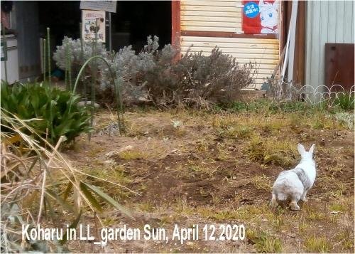 01db 600 小春 LL Garden02