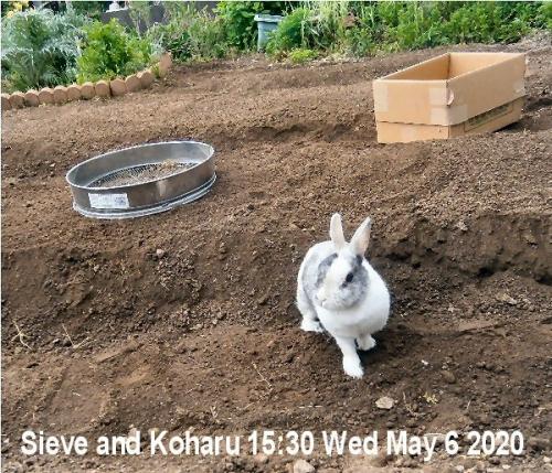 01b 600 20200506 Sieve and Koharu 02