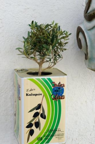 03b 600 hack olive tree