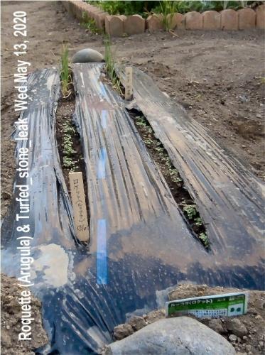 01d 600 200513 Roquette:Arugula Trfed_stone_leak