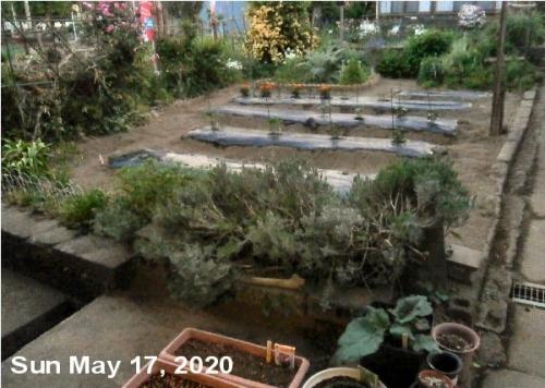 01c 600 sage LL_garden overview