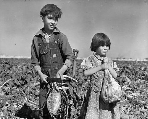 03c 600 Children_and_Sugar_beets_Nebraska_1940