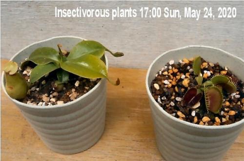 01d 600 insectivorous plants 200524